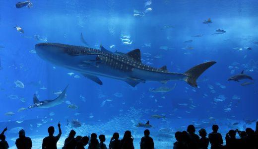 ロマンティックな水族館コン