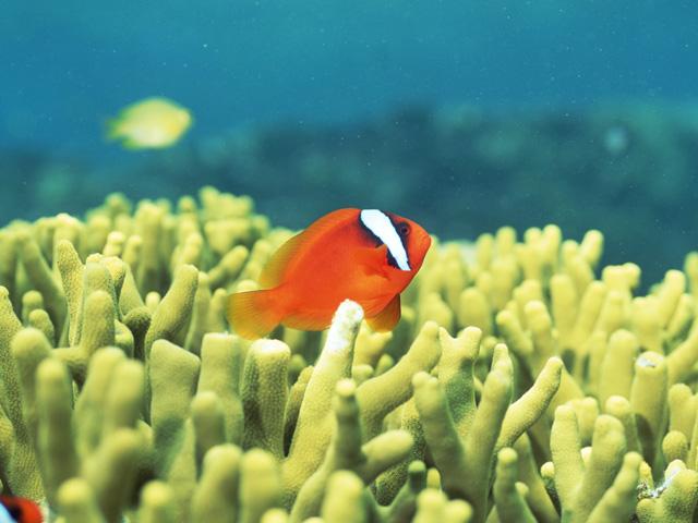 街コンレポート_水族館にいるサンゴ礁とお魚