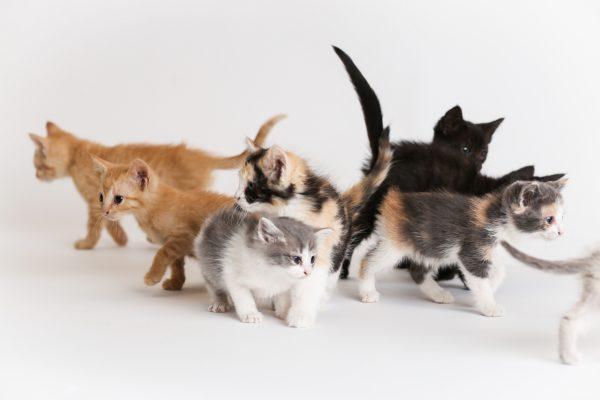 街コンレポート_沢山の子猫
