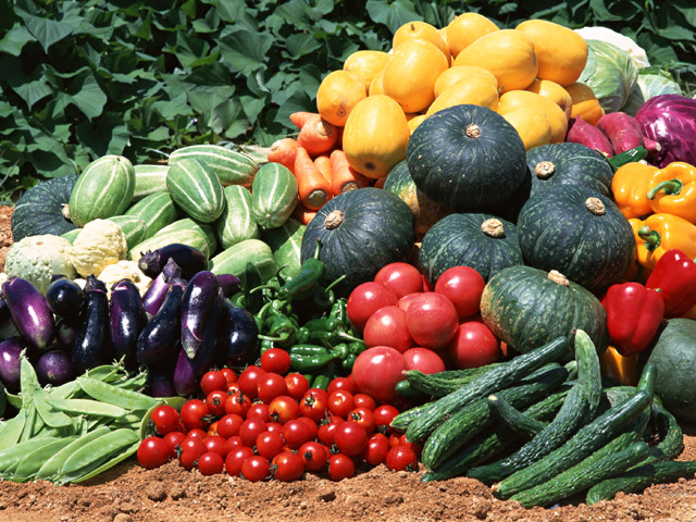 街コンレポート_畑に収穫された農作物が置かれています