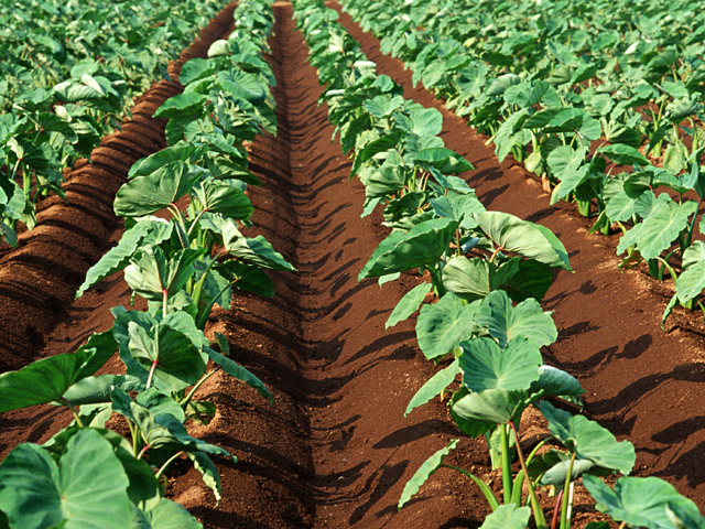 街コンレポート_畑に農作物が植えられています