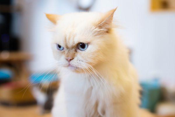 街コンレポート_白い猫が一点を見つめています