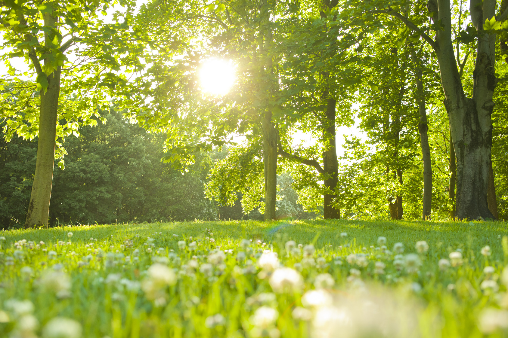 街コンレポート_自然の森の中で太陽の光がさしています