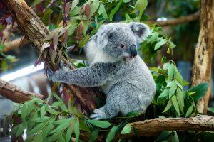 自然体でわいわい楽しめる動物園コンを徹底調査!