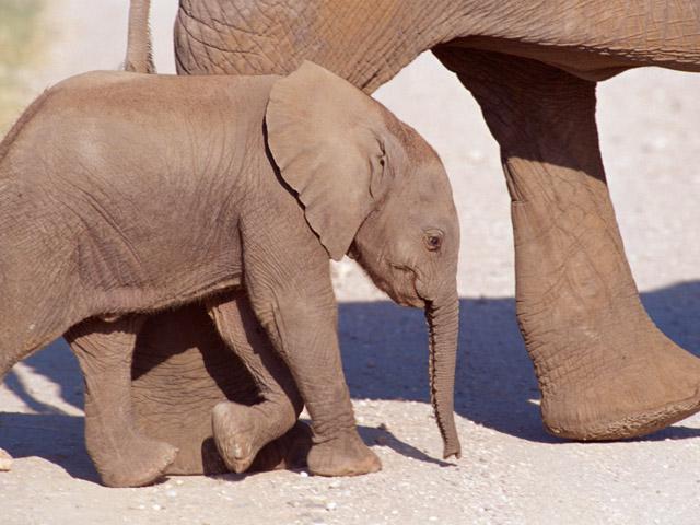 街コンレポート_子象が親象の横を歩いています
