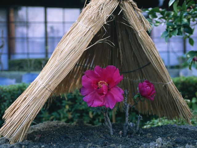 街コンレポート_ピンクの花の上に藁ぼっち