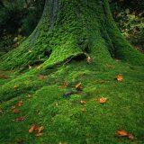 街コンレポート_コケが生えている森の木