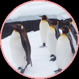 ペンギン系女子って男性からモテるの?