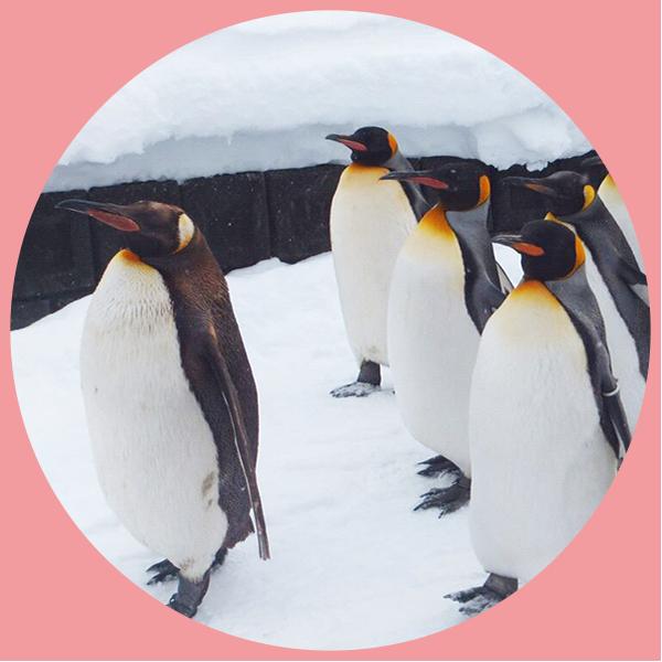 街コンレポート_ペンギン