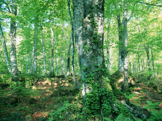 街コンレポート_緑が生い茂る森