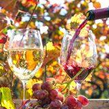 街コンレポート_赤と白のワイン
